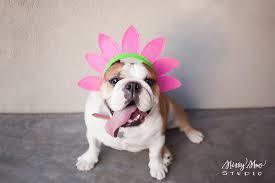 Large_bulldog_spring